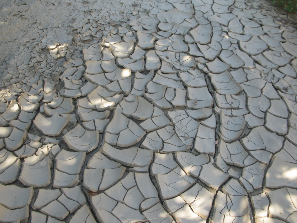 One of my favorite things to do out in the field was stepping on large clay chips!! They were like the bubble wrap of the badlands. I loved stepping on them...crunch crunch crunch!!!