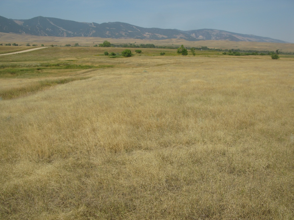 North Africa grass having a rave in the pasture.
