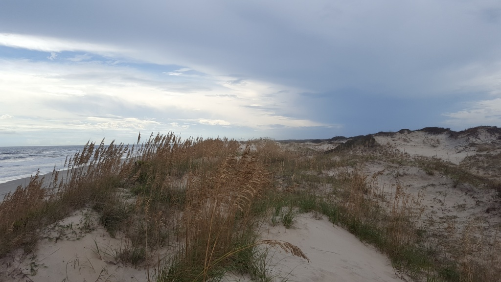 Dunes and Uniola paniculata at False Cape State Park.