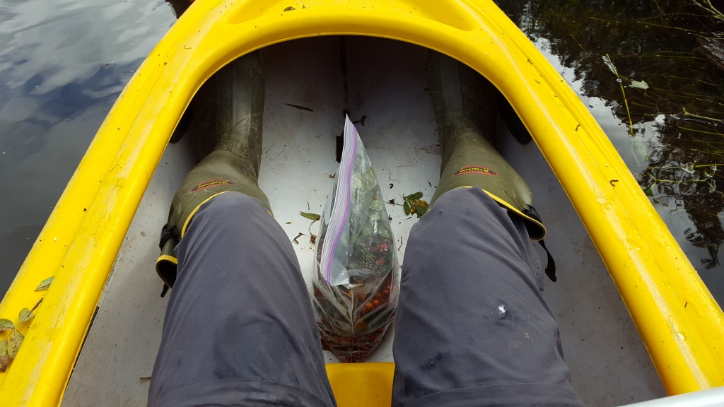 A kayak filled with spiders... probably my worst nightmare.