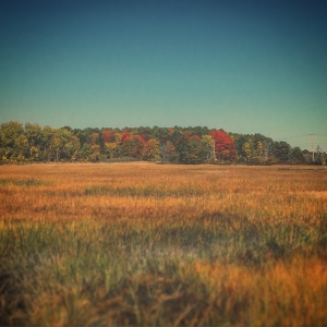 Scarborough Marsh in Maine a few weeks ago, sporting some new Fall colors.
