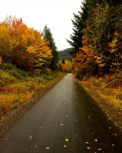 """Autumn shows us how beautiful it is to let things go."" This is the rail trail in the Idaho Panhandle that I biked."