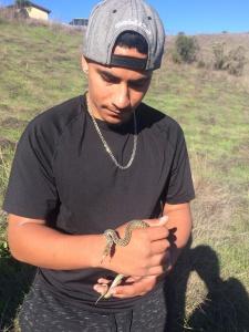 Little gopher snake