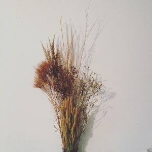 In this native grass wall piece, I have collected Scirpus cyperinus, Schizachrium scoparium, Juncus canadensis, Andropogon glomeratus, foxtail, and 2 non-natives I have yet to identify. It is representative of a wet meadow in Tuckahoe wildlife management area.