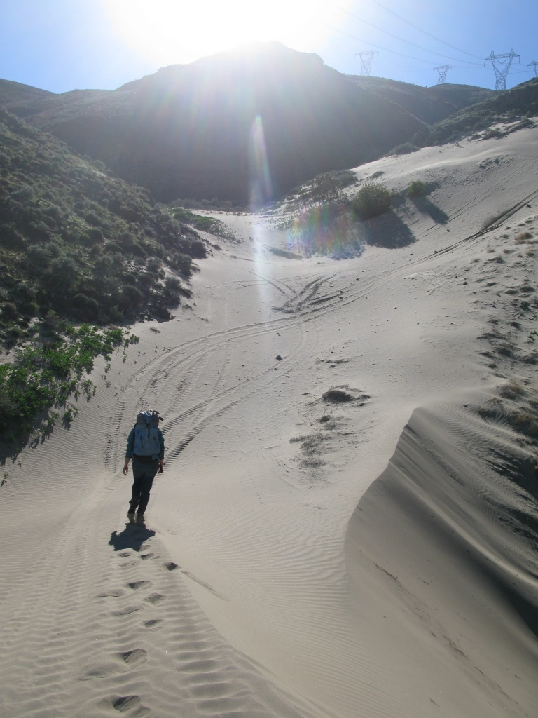 The Dune System near the Saddle Mountains in Washington! This place had a hidden eagle nest that was hard to find! This place had an incredible dune system full of specialized animals. Bonus, the top section of the mountains had opal and petrified wood!