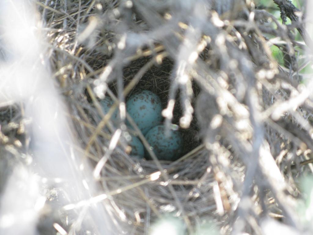 Found an active nest!!