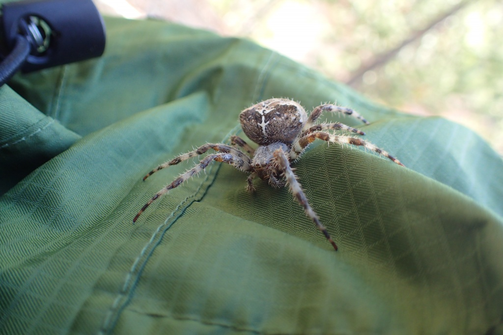A cool spider in Yellowstone!