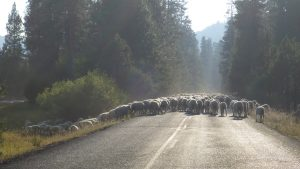 traffic jam in the Ochoco Mountains